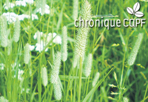 La fléole des prés est une plante fourragère qui résiste mal à la sécheresse et à la chaleur de l'été.