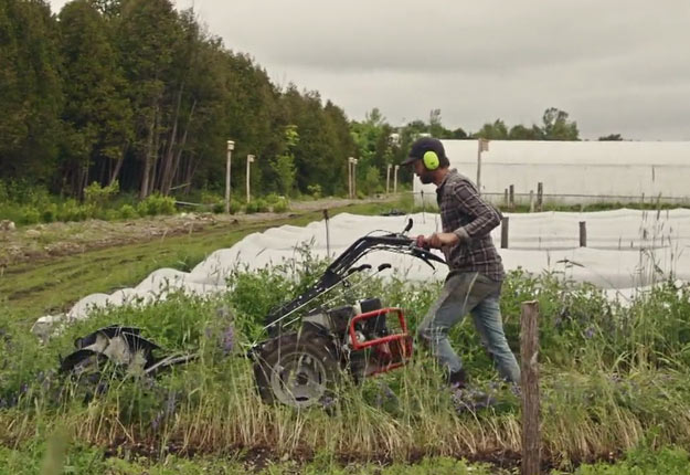 Jean-Martin expérimente une nouvelle technique de non-travail du sol. Il couche les engrais verts pour en faire une sorte de nid de paille dans lequel il plantera des semis. Crédit photo : Gracieuseté d'UnisTV