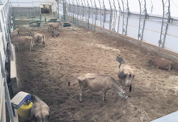 La Ferme-école Lapokita, à La Pocatière, est sous régie biologique. Elle a vu son nombre d'inscriptions en production laitière bio doubler. Photo : Martin Ménard/TCN
