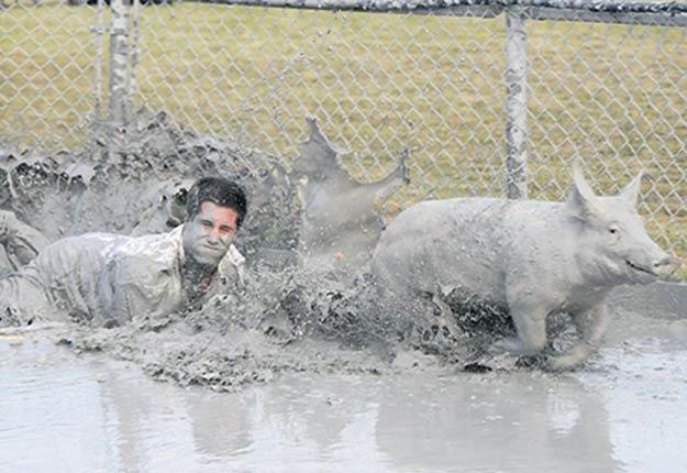 L'origine de la course aux cochons graissés remonte à l'époque où les ouvriers devaient attraper les porcs pour les amener à l'abattoir.