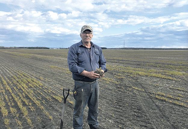 En plus de la baisse du prix du soya et des retards dans les semis, des producteurs de plusieurs régions, comme Alain Godin, du Centre-du-Québec, se désolent du faible taux de survie de leurs cultures semées à l'automne. Photo : Gracieuseté du Centre de grains Godin