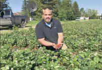 Les premiers jours de juin ont permis à David Côté, de Saint-Paul-d'Abbotsford, de goûter à sa première fraise de l'année. Photo : Gracieuseté de David Côté