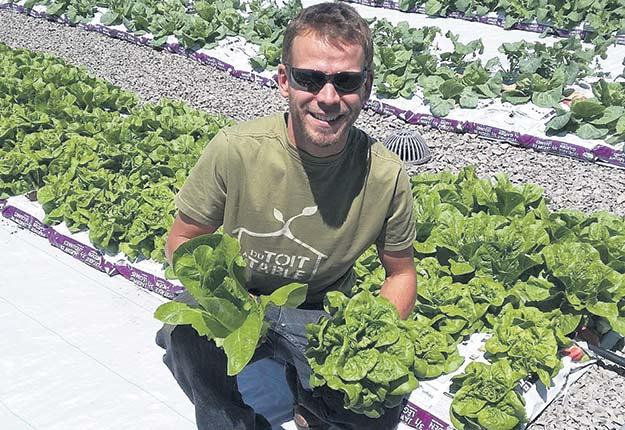 L'année dernière, Du toit à la table a produit 8tonnes de légumes et de produits frais sur les toits.