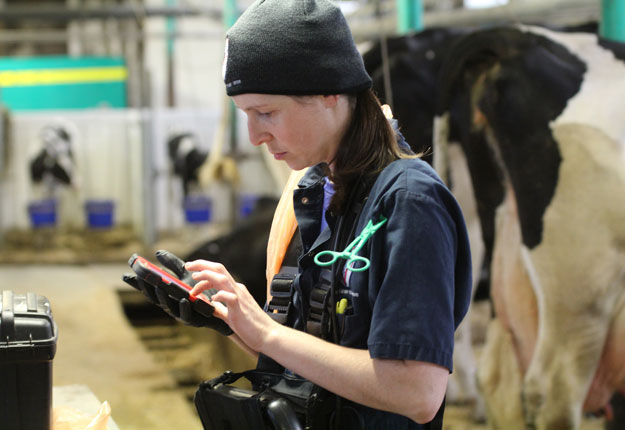 Un nouveau programme de stages financé par le MAPAQ offre aux futurs vétérinaires l'opportunité de se familiariser avec l'agriculture. Crédit photo : Archives/TCN