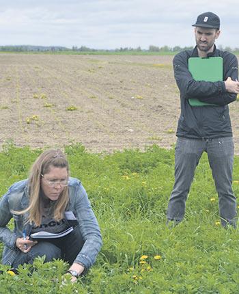 La Tournée des plantes fourragères du CRAAQ se déroule normalement à la fin du mois de mai avant que les champs ne soient récoltés une première fois.  À la place cette année, les participants ont pu voir  des plants qui émergeaient à peine de quelques  centimètres du sol.