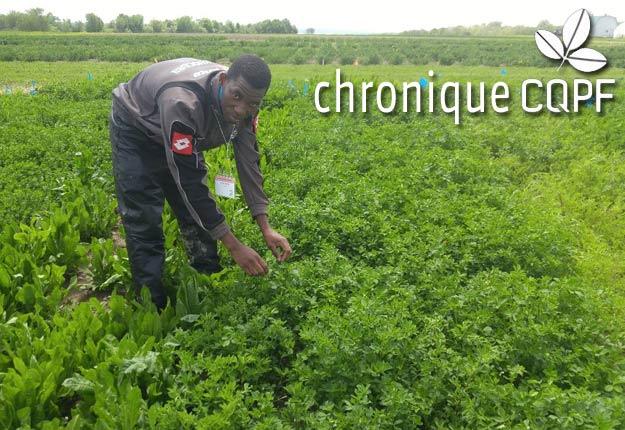 Certaines plantes fourragères riches en tanins condensés ou en lactones sesquiterpènes pourraient aider à combattre le parasitisme intestinal. Photo : CQPF