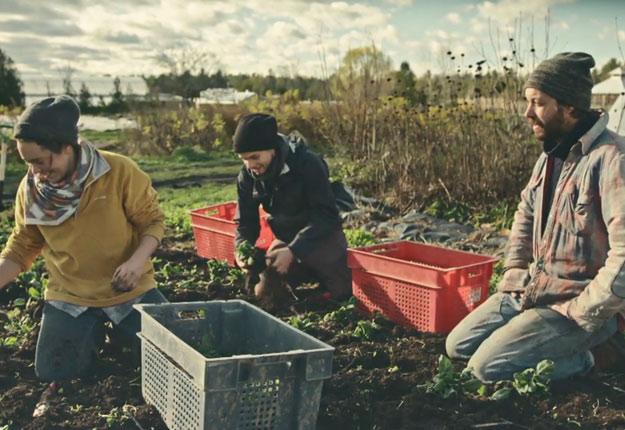 Alice, Dany et Jean-Martin prennent des épinards au champ qu'ils tenteront de replanter dans la serre, pour avoir une production pendant l'hiver. Photos : Unis TV