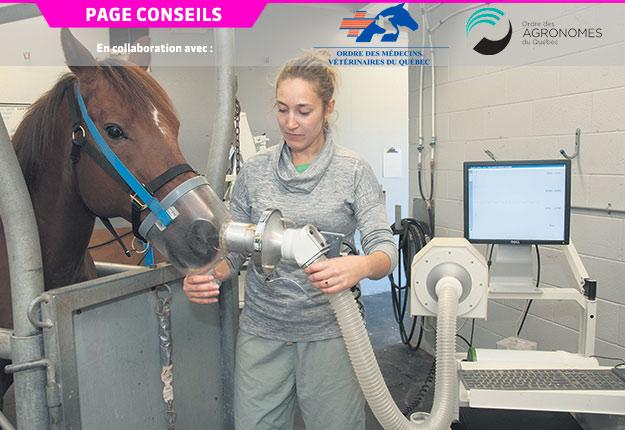 Dans le cadre d'une étude de l'Université de Montréal, les chercheurs caractérisent la fonction respiratoire, l'inflammation pulmonaire et le remodelage bronchique des chevaux asthmatiques. Photo : Marc Langlois, FMV