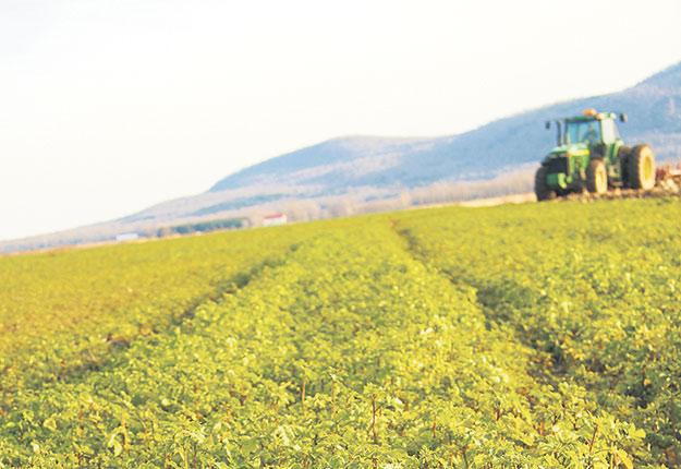 Les experts du GIEC encouragent les agriculteurs à utiliser des cultures de couverture pour retourner du carbone dans le sol. Photo : Archives / TCN