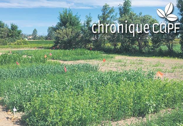 Le rendement, la qualité nutritionnelle, la composition botanique, les stades de croissance à la récolte et la survie à l'hiver seront des données récoltées tout au long de ce projet, qui comprend deux volets.