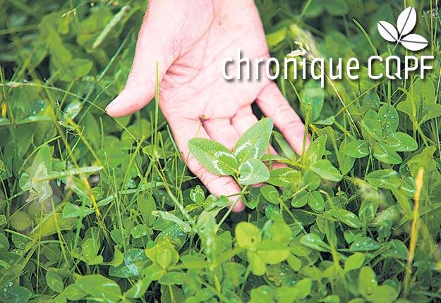 Lorsque le recours aux plantes couvre-sol est combiné à d'autres bonnes pratiques de gestion, cela peut contribuer à améliorer la santé du terreau. Photo : Martin Ménard/Archives TCN