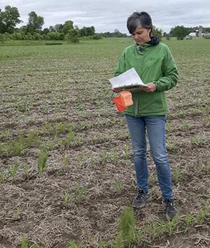 Sylvie Thibaudeau estime que les engrais verts sont de plus en plus populaires. D'ailleurs, les semenciers peinent à répondre à la demande pour certaines espèces comme le pois fourrager ou la féverole, dit-elle. Photo : Gracieuseté de Sylvie Thibaudeau