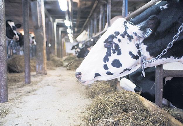 Avec ses trois milliards de données prélevées dans les fermes lors des contrôles laitiers, le centre d'expertise en production laitière Valacta collabore à un ambitieux projet de recherche visant à développer des outils d'aide à la décision des producteurs. Photo : Martin Ménard / Archives TCN