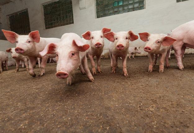 Il n'est pas spécifié si la levée des tarifs s'appliquerait à l'ensemble de ceux qui ont été imposés jusqu'ici ou seulement à ceux ajoutés lors de la dernière ronde de négociation entre la Chine et les États-Unis. Photo : Shutterstock.com