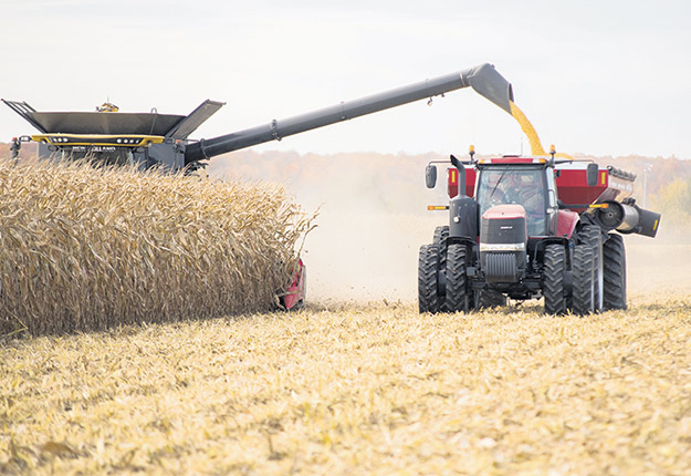 Les rendements moyens des cultures de maïs devraient être légèrement inférieurs à la moyenne des dernières années. Les grains sont également plus humides et présentent un retard de 6 à 20jours selon les régions. Photo : Archives TCN