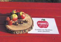 La Belle d'août, la Rosinette, l'Octobre et la Passionata sont les quatre nouvelles variétés représentées par la marque Pommes d'ici. Photo : Gracieuseté de La Pomme de demain