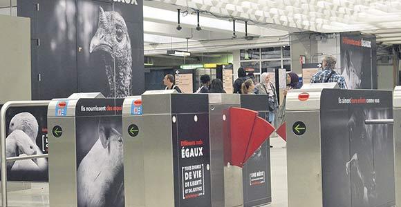 Le mouvement Be Fair Be Vegan a pris le contrôle de la station de métro Berri-UQAM au cours du mois de septembre. À Toronto, sa publicité sera affichée jusqu'au 27 octobre. Photo : Be Fair Be Vegan