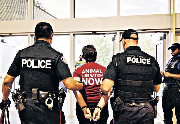 La militante Jenny McQueen s'est introduite par effraction dans une porcherie en Ontario. Photo : Direct Action Everywhere Toronto