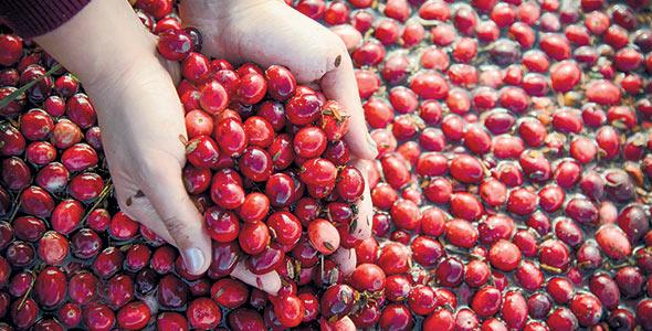 «Présentement, Fruit d'Or réalise 40% de son chiffre d'affaires à l'extérieur du continent. Cette proportion va augmenter de façon modérée dans les années à venir.» — Martin Le Moine