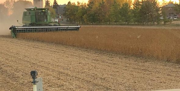 Mathieu Pigeon remarque beaucoup de variation dans les rendements de soya en Montérégie. Le producteur de la région de Saint-Hyacinthe a obtenu une moyenne de 3,7 t/ha, légèrement sous sa normale des dernières années. Crédit photo : Gracieuseté de Mathieu Pigeon