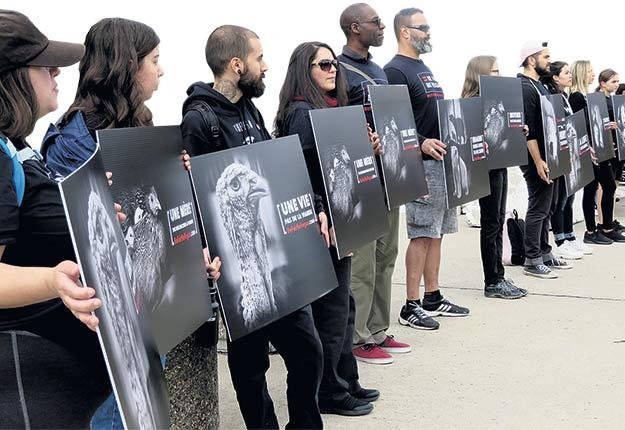 Environ 70 militants antispécistes ont manifesté pacifiquement devant le Stade olympique de Montréal pendant la Journée des portes ouvertes de l'UPA, le 8 septembre, en portant les affiches de la campagne Be Fair Be Vegan. Photo : Agathe Beaudoin
