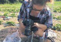 Travail de terrain dans un champ de fraises. Photo : Emmanuelle Mignacca