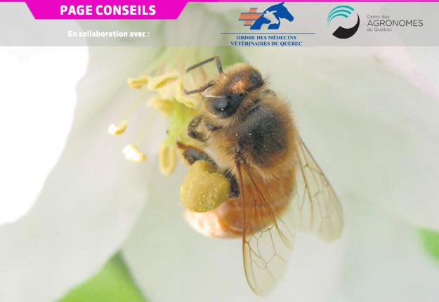 Grâce à une nouvelle application, les agriculteurs pourraient être mieux outillés pour protéger les abeilles. Photo : Archives/TCN