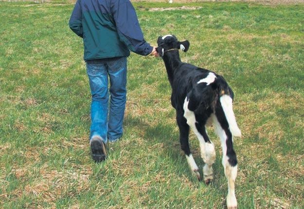 Les Producteurs de lait du Québec souhaitent bonifier leur programme d'aide à la relève en fonction de la formation. Photo : Archives TCN