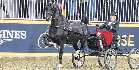Les compétitions équestres font aussi partie des activités de l'exposition, qui s'échelonne sur 10jours.