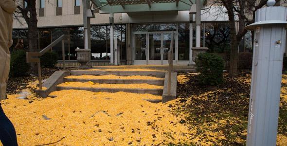 Christian Overbeek dit que le maïs laissé à l'entrée du bureau du premier ministre Trudeau est un échantillon de ce qui pourrait être l'un des plus grands gaspillages alimentaires du Québec.