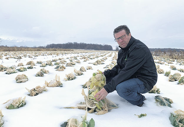 Le producteur Marcel Mailhot a dû laisser environ 50% de sa production de choux-fleurs et de choux romanesco dans ses champs. Photo : Courtoisie de Marcel Mailhot