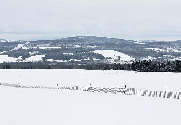 Une équipe de l'Université McGill développe un outil de gestion du territoire prenant notamment en compte les liens entre zones agricoles et boisées. Photo : Archives TCN