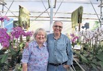 Le respect de l'environnement fait partie du credo des propriétaires du Paradis des orchidées, Sylvie Paquette et Laurent Leblond. Photo : David Riendeau