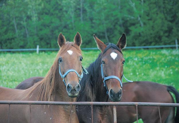 En tant qu'athlète et animal de travail, le cheval est particulièrement susceptible de subir des troubles du système locomoteur. Photo : Archives TCN
