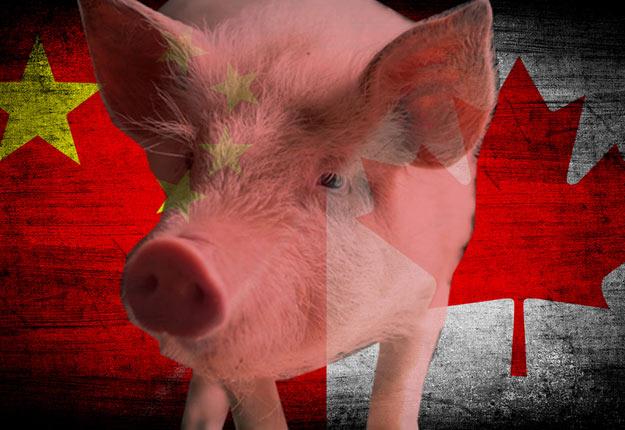 La viande de porc et de bœuf du Canada pourra de nouveau être exportée en Chine. Crédit : Shutterstock.com