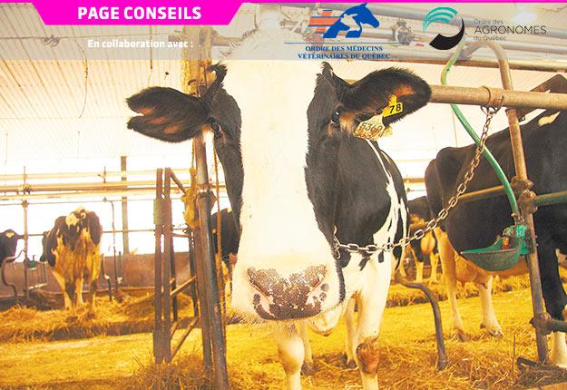 «Il faut que la bonne dose du bon produit soit donnée au bon moment à la bonne vache.» Photo : Martin Ménard/TCN