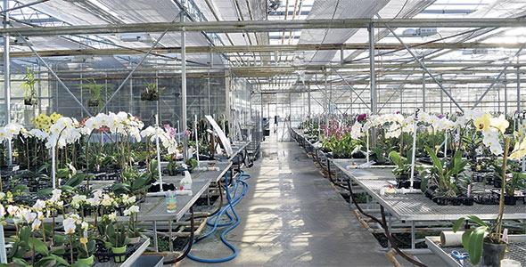 L'entreprise produit 1000variétés d'orchidées, dont plusieurs développées sur place. Les plants proviennent d'Asie, d'Europe et d'Amérique latine et sont cultivés de six mois à quatre ans avant d'être vendus.