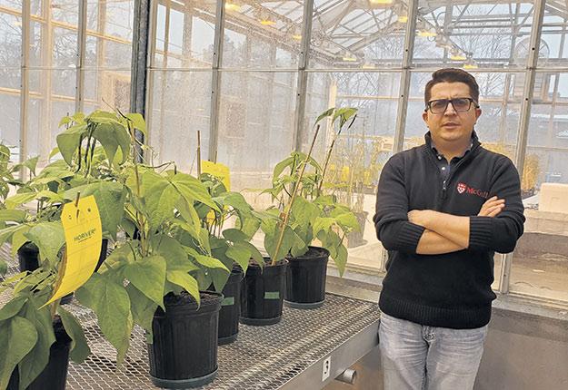 Valerio Hoyos-Villegas cherche à améliorer la productivité des légumineuses cultivées au Québec. Photo : Agence Science-Presse