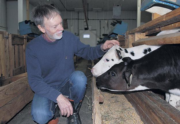 Jean-Robert Audet est toujours passionné par l'élevage des veaux. Photo : Émélie Bernier