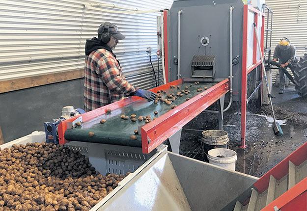 Les noix passent dans la laveuse mécanique où elles sont brossées avec de l'eau. Photos : Geneviève Quessy