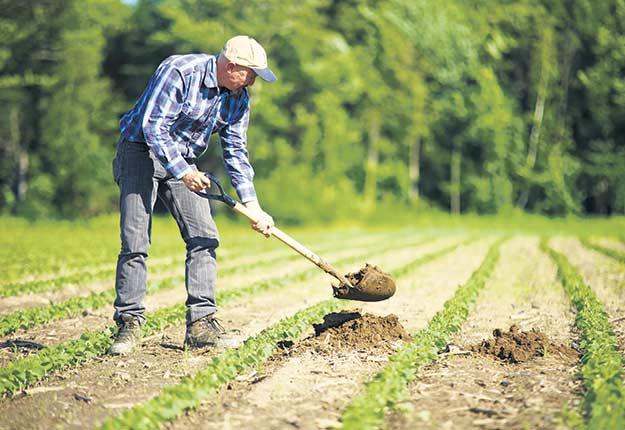 Le bonheur pourrait se trouver à la ferme, selon un récent sondage de la firme Léger. Photo : Martin Ménard/Archives TCN