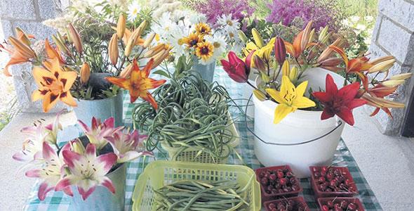 Les propriétaires ont toujours cultivé les légumes et les fleurs selon des méthodes biologiques, mais ils se contentent d'afficher «Sans produits chimiques» puisque la certification serait trop coûteuse pour leur petite production, estiment-ils. Photo : Dominique Wolfshagen
