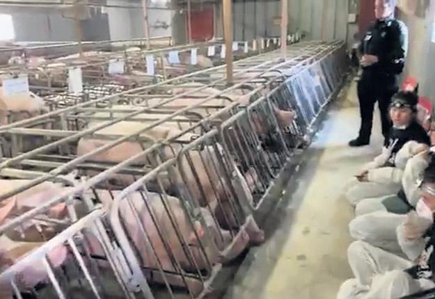 Le 7décembre, 11militants véganes associés au groupe Direct Action Everywhere se sont introduits dans la ferme Les Porgreg, à Saint-Hyacinthe. Ils ont occupé les lieux pendant plus de sept heures et ont documenté leur intrusion sur les réseaux sociaux avant d'être arrêtés par la Sûreté du Québec. Par ce geste, ces activistes ont prétendu vouloir «exposer les conditions horribles qu'endurent les porcs d'élevage» et en appellent à la fin de la consommation de viande. Relâchés le jour même de leur arrestation, ils pourraient faire face à des accusations criminelles au cours des prochaines semaines.