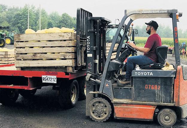 Le producteur maraîcher cultive aujourd'hui des courges sur environ 220acres (90ha), en plus de faire pousser des choux et des grains sur 80acres (32ha). Photo : Gracieuseté de la Ferme Mathieu Lavoie