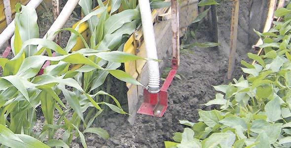 Photo 2 - Sarcleur effectuant le billonnage au dernier sarclage du maïs, équipé de tôles protectrices et d'un semoir pour le semis d'un engrais vert intercalaire.