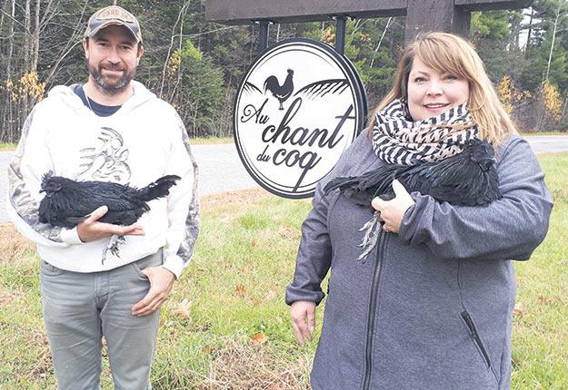 Éric Ferron et Chantal Rondeau sont parmi les rares au Québec à posséder du poulet Ayam Cemani. Photo : Francine Saint-Laurent