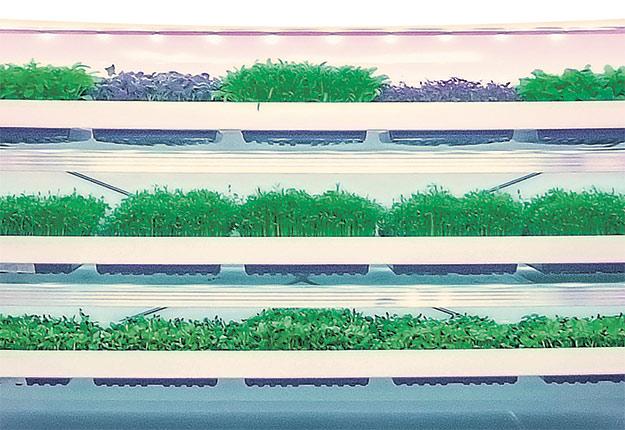 La technologie de fermes verticales développée par Inno-3B équipera bientôt un établissement entièrement automatisé de Dubaï. Photo : Gracieuseté d'Inno-3B