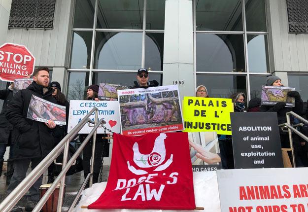 Plus de 60 personnes se sont rendues au palais de justice de Saint-Hyacinthe pour soutenir les 12 activistes véganes accusés. Photo : Josianne Desjardins / TCN