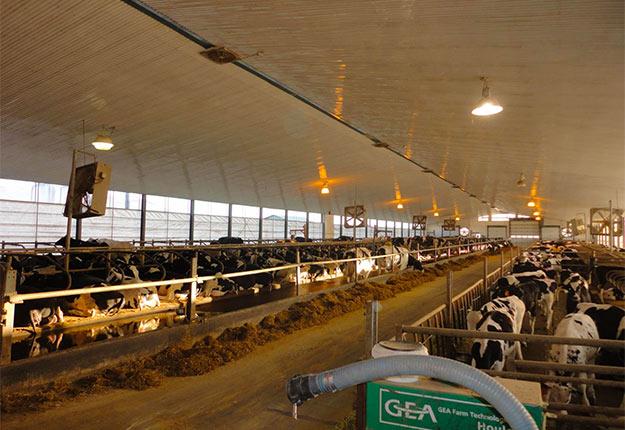 La ferme Landrynoise compte 2900 têtes, dont 1400 vaches en lactation et 1700kilos de quota. Photo : Gracieuseté