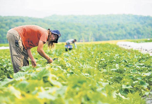 Les employeurs sont invités à mieux gérer leurs ressources humaines pour faire face à la pénurie de main-d'œuvre en agriculture. Photo : Martin Ménard/Archives TCN